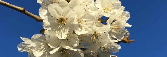 Glorious blossom oi tree